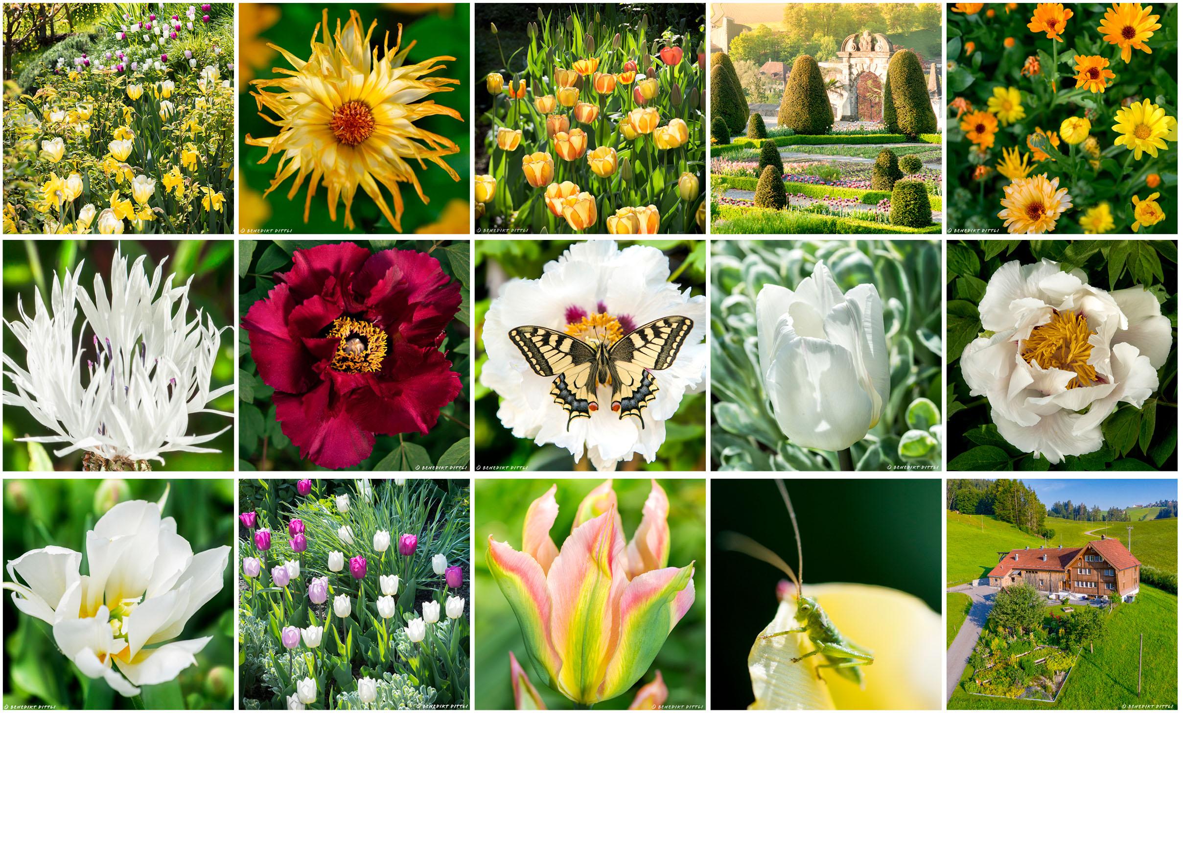 Gartenfotografie, Gartenfotograf, Porträtfotografie, Porträtfotograf, Fotograf, Fotografie, Werbefoto, Werbefotograf, Fotoproduktion, Interiorfotograf, Interiourfotografie, professioneller Fotograf,